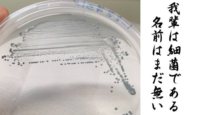 新種生物はあなたのすぐそばに!?微生物に魅せられた東大院生が語るミクロな世界