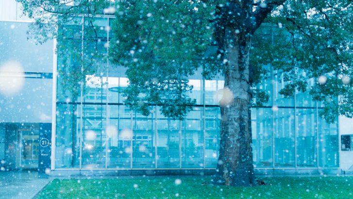 秋冬を感じる駒場キャンパス写真集